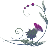 Illustration of colorful thistle blossom